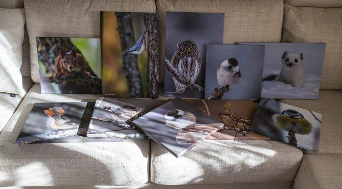 Tavlor till kommande fotoutställning på Sorsele hembygdsgård